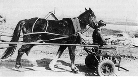 Телега впереди лошади Image001